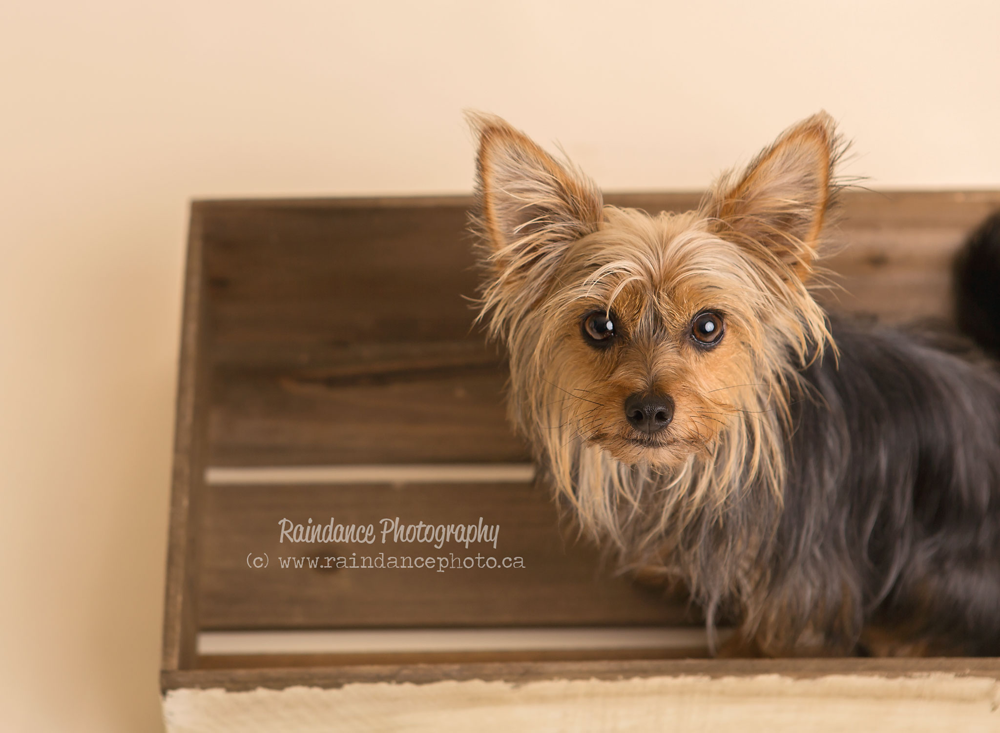 Barrie Pet Photographer