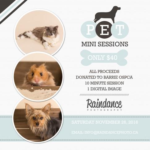 Barrie Pet Photographer